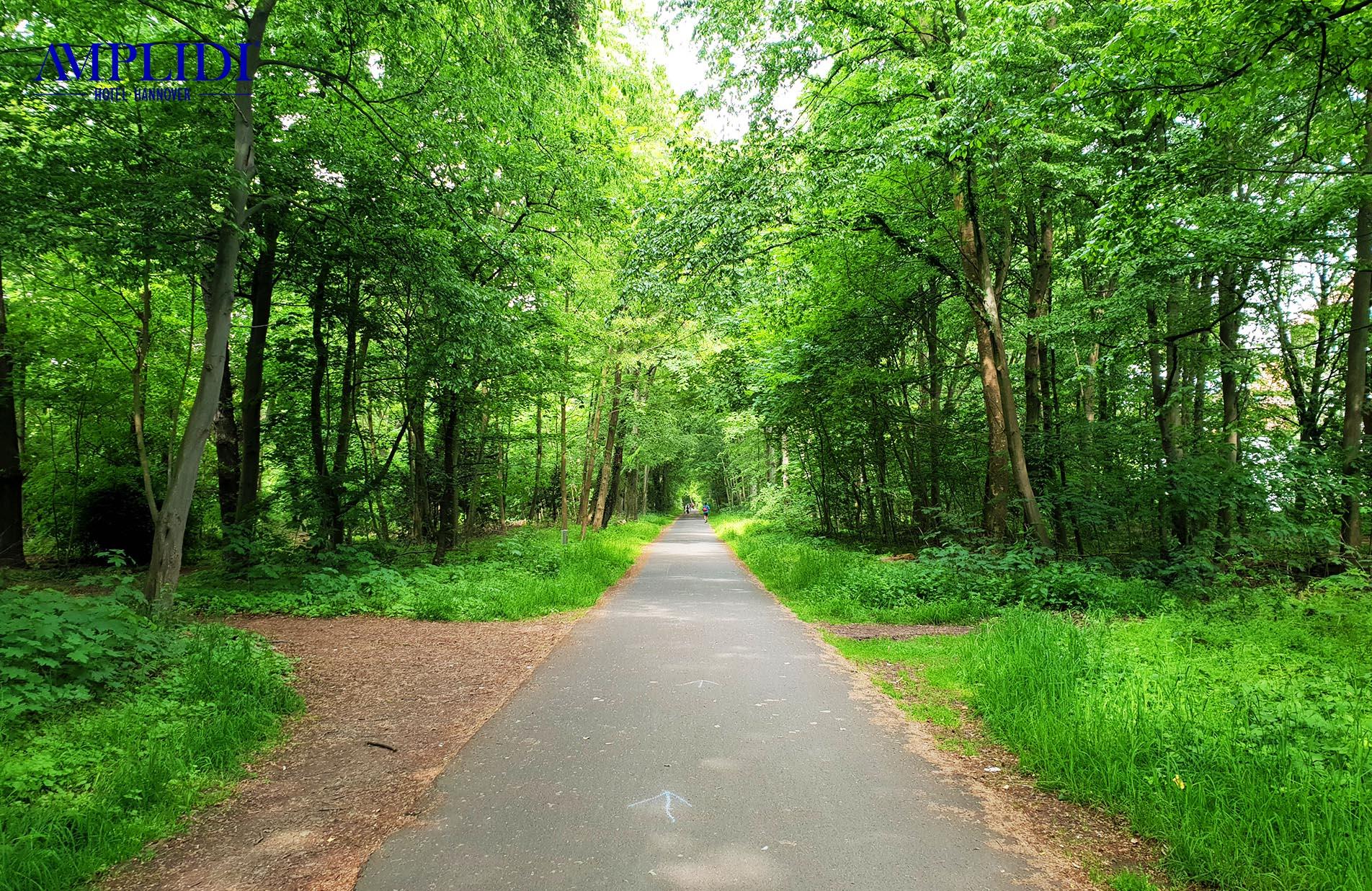 Ein Weg im Eilenriede