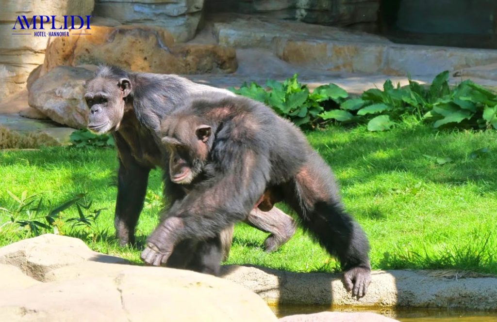 Der Erlebnis Zoo Hannover